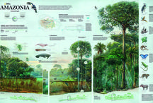 Nature maps