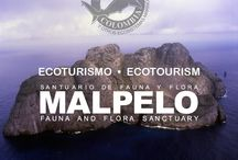 Santuario Flora y Fauna Malpelo / The Malpelo Foundation is a nonprofit environmental non-governmental organization, established in 1999 under the Republic of Colombia legal system. The objective of the organization is to support the government towards the conservation, education and research of the Colombian marine ecosystems, focused in the Sanctuary of Fauna and Flora Malpelo.