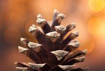 motif | pine cone