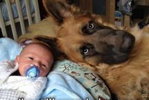 Funny and cute / Love animals