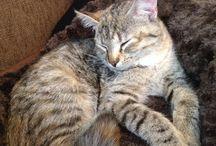 Lilliputti The Cat