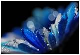 My Blue Starry Sky  / Blue & silver luv