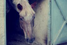 Equestrian Club of Cyclades / Horse Riding, Equestrian Sports