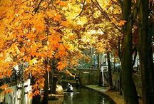Wonderful Waterways / by VIDA