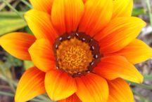 vi ~Flowers~ / Flowers
