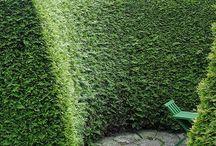 Hecken/hedge