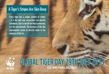 Global Tiger Day 2013