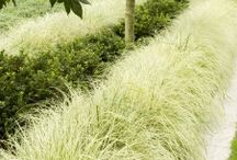 Planting a border of grasses