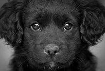 Hundar / Allt om hundar