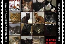 Help save death row cats!