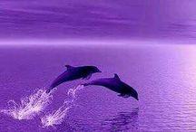Дельфины луна