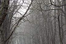 Landscape-Winter-Photography