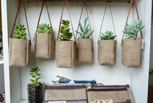 Coffee bag planting