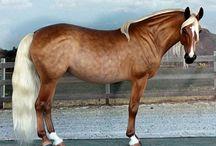 Model Horses / by Keri Parker