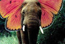 Elefhant