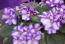 House Plants / I grew up having plants in the house, my Mom had a green thumb! She raised the most fabulous Violets) / by Sherri Kellberg