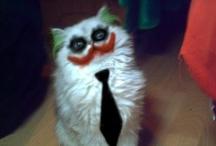 Batcats & Jokercats / Nananananananana - CATMAN!