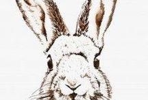 zające/króliki