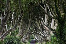 Cestovanie: Írsko
