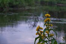 река Иж / природа