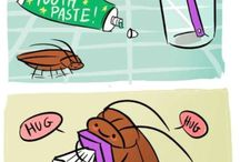 Cockroach / All about cockroach