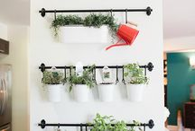 Anne's Plant Wall