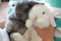 hrački pre zajačiky