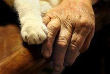 Grandma And Her Cat