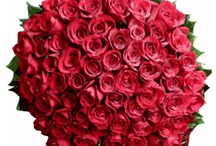 This Valentine, Let Roses Express!!  / Just 3 weeks to go and search for love, unique & rare gifts and roses has already begun. Like it is said, None could ever Express your emotions better than Roses! Exclusively to Indonesia>>http://bit.ly/send-red-valentine-roses-to-indonesia