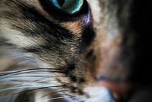 Olhar animal