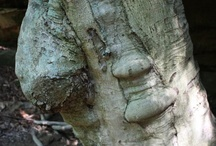 Dryads / naturally occurring tree folks / by Beckii Cooper
