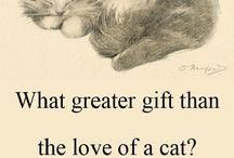 Katt citat