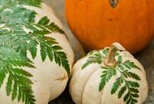 Fall Decorations / by Gail Kepler