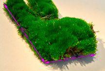 Macro lens & iPhone 6s / Moha / Moss