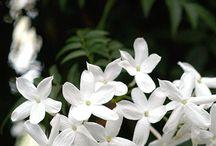 Bahçe/Çiçekler