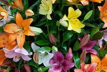 Foliage / by Rebecca Cisneros
