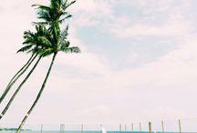   Tan & Palm trees  