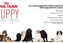 Puppy Pinterest Contest / Enter our puppy contest to win great prizes, like a 3 month supply of food, $100 gift card and more! Enter here: http://bit.ly/1kz8xWy