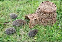 Pożyteczne zwierzęta w ogrodzie