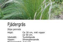 Perenner / Bladverk och gräs