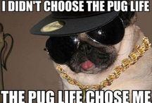 Pugs / Pug love !
