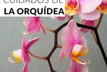 Cuidado de las orquídeas