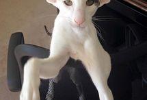 big ears!