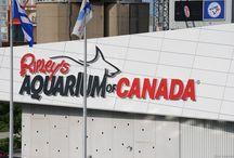 Ripley's Aquarium Toronto, Ontario / Pictures taken at and of Ripley's Aquarium in Toronto, Ontario