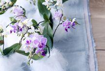 Stijlgids orchideeën 'Spring Summer 2015' / De orchidee is een geliefde plant, de meeste mensen hebben wel één of meerdere orchideeën in huis. Er is altijd een orchidee die past in jouw woonstijl. Veel heeft de orchidee niet nodig om tot z'n recht te komen, de plant heeft van zichzelf al de 'wow'-factor en is een blikvanger op zich. Kortom, orchideeën maken het op een eenvoudige manier bijzonder!