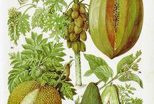 Art - Prints - Botanical