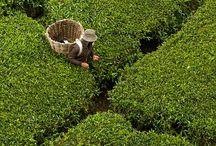 Tea Lovers Recipes / www.christinaarokiasamy.com