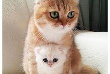 Kočky / obrázky kočiček