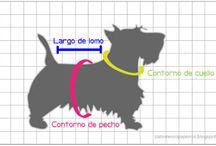 molderia para mascotas
