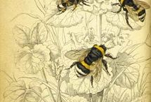 мёд и пчелы